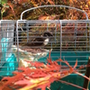紅葉とスズメ