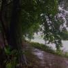 風景(雨2)