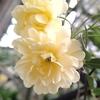 庭の花と日本画