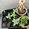 植え替えと種まき