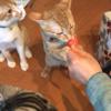 ちびっ子達の里親さんと猫話で盛り上がる。
