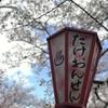 訓練18日目 今日は観桜会