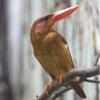 ごくごく私的な「鳴鳥」・ベスト3
