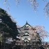 おでかけ・あおいもり〜弘前|日本一の桜を愛でに〜