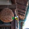 軒下のスズメバチの巣を駆除業者にお願いしたら 相場はどのくらい?個人ブロガーがレビューします