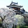 奈良大和郡山。金魚と郡山城跡の桜。