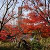 晩秋の六本木 東京ミッドタウン リッチな立地でも無料で紅葉を楽しめます