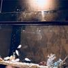 お魚がいるお店で…夢を語る竜宮殿