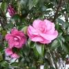 消えない疲労感&咲き誇る花の未来 今日は穏やかなつもりの闘病記録