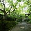 過去の写真セレクション(夏の温室と京都旅行)