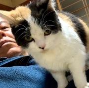 6ヵ月の過保護な子猫が腸管出血してワタクシの常用する胃薬で治し、猫シャンプーを自分でやって54才にして初めて親子関係の人間理解が深まった勤労感謝の日