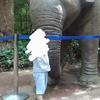 3歳と行くよこはま動物園ズーラシアのおすすめ