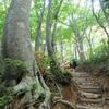 ブナ林の急坂を登る