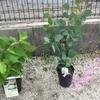 男の家庭菜園シリーズ18