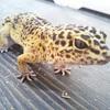 爬虫類カフェROCK STARで虫を食べる。。。