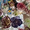 ロウの花の色塗り&ローストポーク(低温調理)、大根3種、鯛の煮つけ
