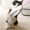 【愛猫日記】毎日アンヌさん#80