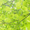 茶屋池でブナの森歩き