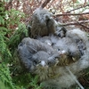 ヒナが巣立ち予定日を1日オーバーしている野鳥の巣は・・・沈没寸前