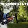 フォルクスワーゲンが自動車の次に遠隔操作するのはなんと犬「The Connected Dog」