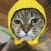 【猫ブログ】そもそも猫とは・・・ 知識篇