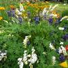 競い合って咲き誇る ( ◠‿◠ )今年の花壇