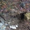 別荘の前の持ち主が地面に埋めた食品ごみを動物が掘り返した形跡を発見、そして同情