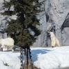 旭山動物園の動物たち