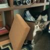【泥棒】決定的証拠を押さえられても、尚犯行を続ける猫はこちらです...w