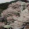 奈良県のおススメ桜スポット! 壺阪山寺