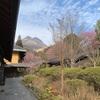【由布市】由布院温泉 梅園~今が見頃!梅の香り漂う絶景露天風呂