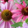 乳がん闘病中の小林麻央さんのアメブロオフィシャルブログ KOKOROが始まりました。応援しています。