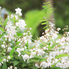 春の庭 穀雨の頃(4月20日頃)の庭トピック