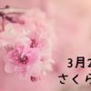 【今日は何の日?】お花見の時期到来!3月27日はさくらの日✿
