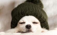 今日から使いたい!自分や周囲を暖かくする、ほっこり英語フレーズ