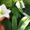 緑ワサワサ春の庭