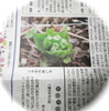 今朝の愛媛新聞「単眼複眼」に☆&野菊さんからもらったお野菜&大好きな宇和島銘菓「大番」♪
