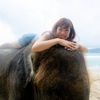 象さんと夕暮れ