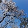 春休み突入しました 桜は咲き始めましたが今年は眺めるだけで