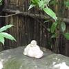 今月の「尼僧と学ぶやさしい仏教講座」は7月23日。テーマは「お盆」です。「お盆」って何でしょう?あらためて、その意味と大切さを考えてみましょう。