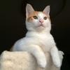 子猫の去勢手術抜糸と、掌蹠膿疱症の悪化