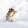 人が冬眠できたらどうなる?  マウスの冬眠成功で広がる今後の可能性