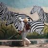 コロナ後の動物園 突然の来園者に動物たちは対処できるのか?