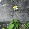 つぶやきは写真の下で 小さな花のつぶやき