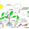 植物デストロイヤーの僕でも家庭菜園で収穫できたので紹介 野菜づくりの今後の展開