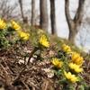 ◆'21/04/16 ちょっと花を観に