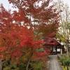 芸術と紅葉の秋を楽しみに京都へ行ってきました