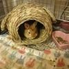 新しいウサギちゃんをお迎えしました♪