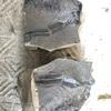 ベランダで化石のクリーニング 家で出来る趣味 白亜紀の化石
