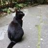 尾道の坂道を歩き続けて発見した猫が沢山いる場所【尾道旅3】